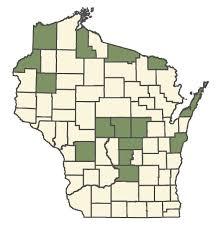 Veronica verna - Online Virtual Flora of Wisconsin