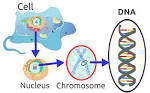 Images & Illustrations of DNA