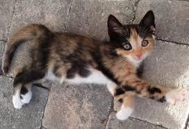 JewelClan cats Images?q=tbn:ANd9GcRpMiyr4R-bSbwH6MdXyQc3xZ8-9eMk7QCEyuzQR6jylqZBXSUJ