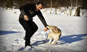 <b>Защита от собак</b> - краткое руководство по самообороне