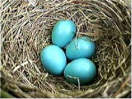 Image result for robins eggs