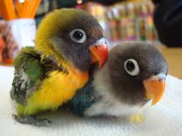 Image result for The lifespan of 75 percent of wild birds is 6 months.