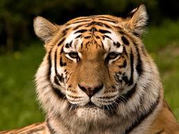 wildlife conservation wildlife conservation