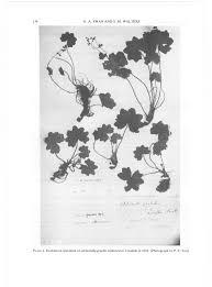 Alchemilla gracilis Opiz, a species new to the British flora