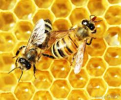EU fondovi pčelari pčelarstvo