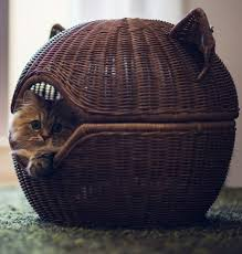 1000 ideas about cat beds on pinterest cats cat houses and cat furniture cat lovers 27 diy solutions
