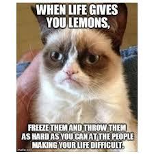 Funny Cat Memes On Pinterest - funny cat memes pinterest also Meme ... via Relatably.com