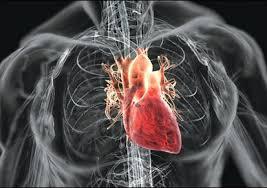 Imagini pentru Vitamine si minerale care, in exces, iti afecteaza inima