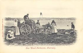 Image result for douglas seaweed harvest