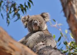 Image result for images of Kangaroo Island