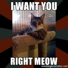 I Want YOU RIGHT MEOW - The Most Interesting Cat in the World ... via Relatably.com
