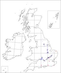 Pulsatilla vulgaris | Online Atlas of the British and Irish Flora