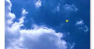 Resultado de imagem para pipa no ceu