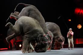 ringling bros circus ends controversial elephant act after  ringling bros circus ends controversial elephant act after 145 years newshour
