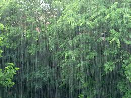 """Résultat de recherche d'images pour """"il pleut des cordes"""""""