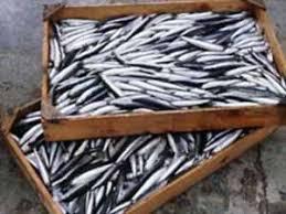 anchoa bilaketarekin bat datozen irudiak