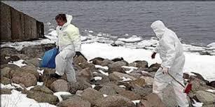 Svanen hittades av Mikael Beckgärd, som var ute på strandpromenad med sina barn och hunden. Han ringde polisen direkt. – Damen i polisens växel verkade ... - ART-INLINE-0-svan_400_33228a
