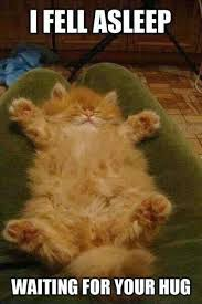 Funny Fluffy Cat | Funny Pictures, Quotes, Memes, Jokes via Relatably.com