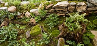 Image result for moss
