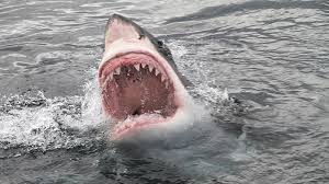 Great <b>white sharks</b> detected in RI waters this <b>summer</b> | WPRI.com