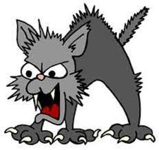 Bildresultat för arga katter får rivet skinn