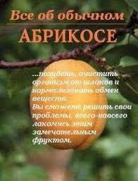 <b>Иван Дубровин</b> - <b>Все об</b> обычном абрикосе читать онлайн