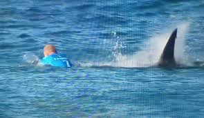 the world tour heads back to j bay for despite the shark mick fanning shark j bay