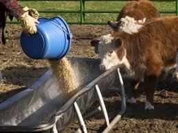 Antibiotics in Cattle - Beef2Live | Eat Beef * Live Better