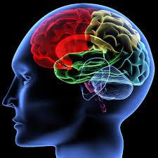 Hasil gambar untuk gambar otak