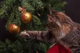 Сосна, <b>пихта</b> или пластмасса? Как выбрать новогоднюю <b>елку</b> ...