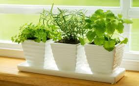 Kitchen Windowsill Herb Garden 7 Tips For Growing An Herb Garden In Your Kitchen