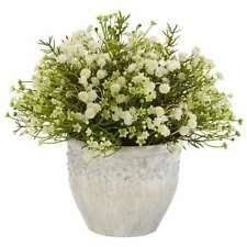 Комнатное растение цветочный декор - огромный выбор по ...