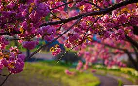 Image result for spring images free