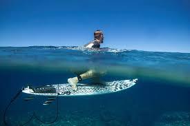 Premium Surf Accessories & Equipment – Creatures of Leisure USA