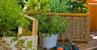 9 <b>Gardening</b> Tips for Beginners | Real <b>Simple</b>