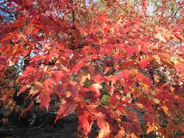 A <b>Nice Mix</b> Of Autumn Tasks - Rotary Botanical Gardens