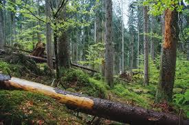 Výsledek obrázku pro práce v lese