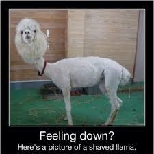 I hope you feel better « Humor « ImgLuLz – Funny Pics and More via Relatably.com