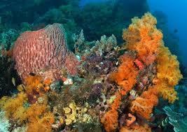 <b>Coral Reefs</b> and Corals | Smithsonian Ocean