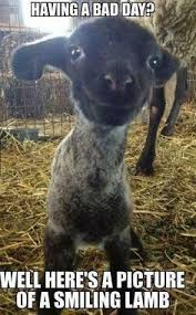 Smiling lamb | Funny memes | Pinterest | Smiling Lamb and Lamb via Relatably.com