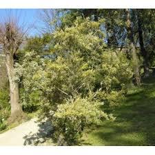 Genere Erica - Flora Italiana
