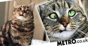 We've fallen in love with Olive the <b>cross</b>-<b>eyed cat</b> | Metro News