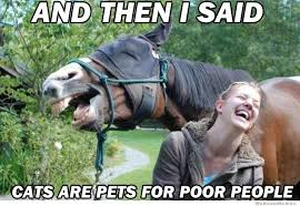 Horse MEMEs for horse lovers | HorseShipUSA via Relatably.com