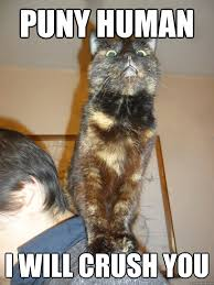 Puny human i will crush you - Megalomaniac cat - quickmeme via Relatably.com