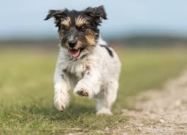 What Is a <b>5</b>-in-1 Vaccine for <b>Dogs</b>?