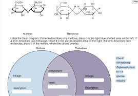 the structures of maltose and trehalose are shown       chegg comlabel the venn diagram  if a term describes only
