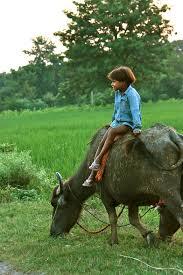 tbi photo essay mera gao power providing a brighter future two girl atop buffalo in the evening light