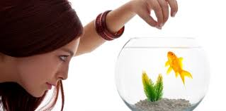 Image result for Goldfish picture