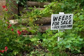 Image result for weeds