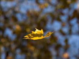 Image result for leaf falling pictures